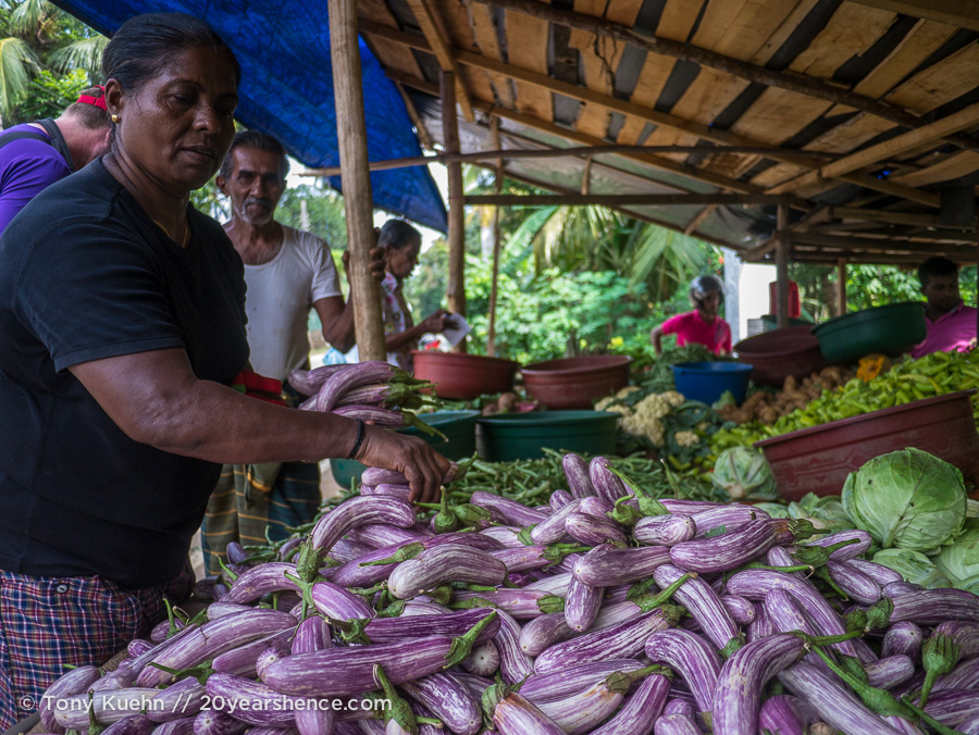 Picking out brinjal
